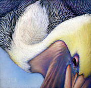 Texas Pastels Originals - Diving Pelican by Laura Griffith
