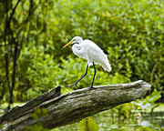 Egret Digital Art Posters - Do The Hokey Pokey Egret Poster by J Larry Walker