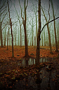 Bare Trees Photos - Do We Dare Go Into The Woods by Karol  Livote