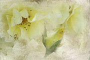 Garden Flowers Photos - Do Yellow Roses Say Goodby by Diane Schuster