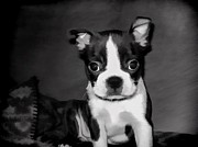 Cute Dogs Digital Art - Do You Love Me by Jordan Blackstone