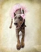 Headband Metal Prints - Doberman Ballerina  Metal Print by Susan  Schmitz