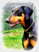Dog Portrait Digital Art Originals - Doberman by Betsy Cotton