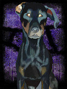 Doberman Framed Prints - Doberman Dark Background Framed Print by Jilly SB