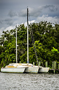 Docked Sailboat Prints - Docked Trimaran Print by Carolyn Marshall