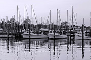 Docked Sailboat Posters - Docking in Black and White Poster by Francie Davis