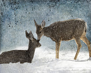 Animal Framed Prints - Doe a Deer Framed Print by Juli Scalzi