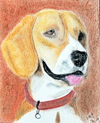 Best Friend Pastels Framed Prints - Dog - Beagle - Memories of Ole Framed Print by Donna E Pickelsimer