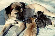 Dog Adopts Kittens Print by Lanjee Chee