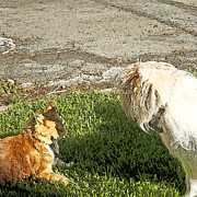 Dog And Cat Discuss Print by Artist and Photographer Laura Wrede