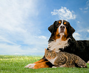 Devoted Prints - Dog and cat together Print by Michal Bednarek