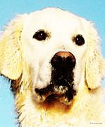 Dog Art - Sky - Golden Retriever Print by Sharon Cummings