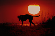 Dog At Sunset Print by Jana Thompson