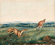 Famous Artists - Dog chasing a kangaroo by Adam Gustavus Ball