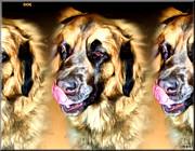 Dog Print by Daniel Janda
