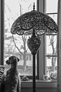 Brenda Giasson - Dog Day Afternoon II