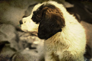 Dog Photographs Photos - Dog by Ece Yolac