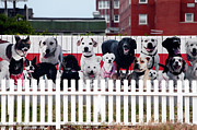 Dog Pics Photos - Dog Fence by John Rizzuto