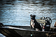 Dog In Lake Prints - Dog Gone Fishing Print by Peggy  Franz