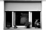 Guarding Posters - Dog in a window Poster by Fabrizio Troiani