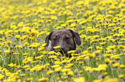 Mongrel Framed Prints - Dog In The Meadow Framed Print by Michal Boubin