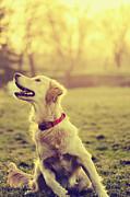 Dog In The Park Print by Jelena Jovanovic
