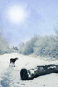 Foot Prints Posters - Dog Looking Back Poster by Christopher Elwell and Amanda Haselock