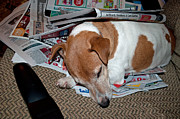 Gwyn Newcombe - Dog Nap