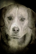Dog Posing Print by Loriental Photography