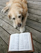 Nature Study Photo Prints - Dog Reading Print by Jean Schweitzer