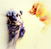 Sun Breakthrough Photo Prints - Dog Romance Print by Hilde Widerberg