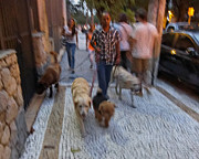 Dog Print Photo Prints - Dog Shepherd - Sao Paulo Print by Julie Niemela