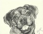 Irina Cumberland - Dog sketch number 3