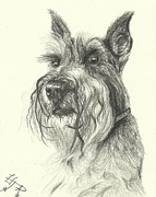Irina Cumberland - Dog sketch number 4