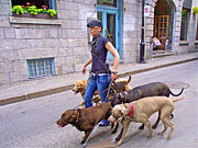 Old Montreal Digital Art - Dog-walker in Old Montreal-QC by Ruth Hager