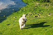 Dog Walking Prints - Dog walking on the moss  Print by Blanchi Costela