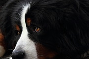 Best Friend Photos - Dog by Wingsdomain Art and Photography