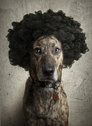 Brindle Prints - Dog With a Crazy Hairdo Print by Chad Latta