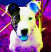 Puppies Digital Art - Dog With Blue Tongue by Kathy Budd