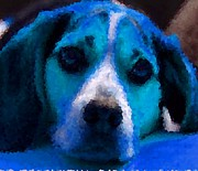 Puppies Digital Art - Doggie Blues by Kathy Budd