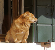 Ron Harpham - Doggie in the window