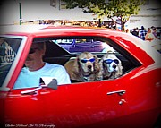 Canines Digital Art - Doggies in the Window by Bobbee Rickard