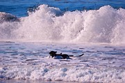 Dogs At Carmel California Beach Print by Barbara Snyder