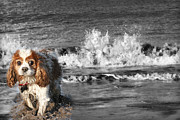 Farmyard Digital Art Posters - Dogs enjoying the sea Poster by Jo Collins