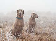 Sari ONeal - Dogs in Frosty Fog