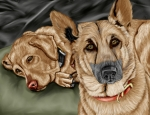 Golden Lab Prints - Dogs Print by Karen Sheltrown