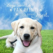 Animal Paw Print Prints - Dogs leave paw prints on your heart Print by Li Or