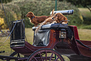 Cj-8 Prints - Dogs of the Carriage Print by CJ Schmit