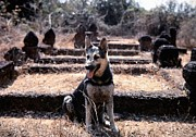 Mel Steinhauer - Dogs Of War