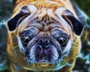 Counterculture Photo Framed Prints - Dogs - The Psychedelic Fantasy Pug Framed Print by Lee Dos Santos